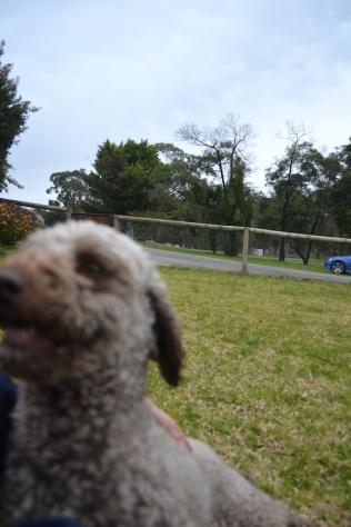 Banksia Park Puppies Fussle - 38 of 43
