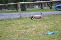 Banksia Park Puppies Fussle - 4 of 43