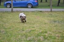 Banksia Park Puppies Fussle - 6 of 43