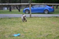 Banksia Park Puppies Fussle - 7 of 43