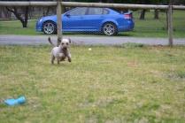 Banksia Park Puppies Fussle - 8 of 43