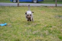 Banksia Park Puppies Fussle - 9 of 43