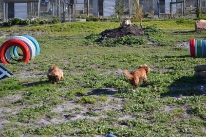 Banksia Park Puppies Jacinta - 1 of 49