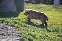 Banksia Park Puppies Jacinta - 13 of 49