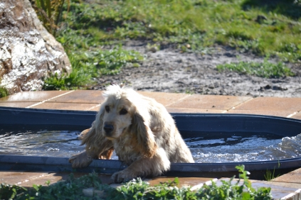 Banksia Park Puppies Jacinta - 16 of 49