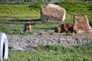 Banksia Park Puppies Jacinta - 3 of 49