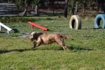 Banksia Park Puppies Jacinta - 38 of 49