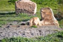 Banksia Park Puppies Jacinta - 4 of 49
