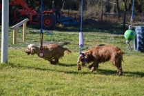 Banksia Park Puppies Jacinta - 42 of 49