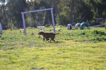 Banksia Park Puppies Jacinta - 44 of 49