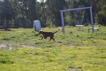 Banksia Park Puppies Jacinta - 45 of 49