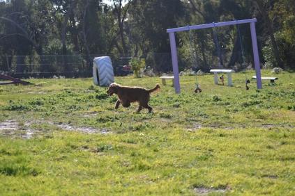 Banksia Park Puppies Jacinta - 45 of 49