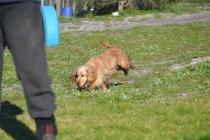 Banksia Park Puppies Jacinta - 46 of 49