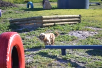 Banksia Park Puppies Jacinta - 49 of 49