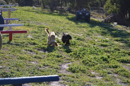 Banksia Park Puppies Jazz - 1 of 41