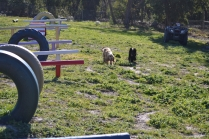 Banksia Park Puppies Jazz - 2 of 41