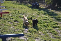 Banksia Park Puppies Jazz - 4 of 41