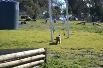 Banksia Park Puppies Jazz - 8 of 41
