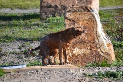 Banksia Park Puppies Jellybean - 10 of 69