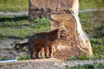 Banksia Park Puppies Jellybean - 11 of 69