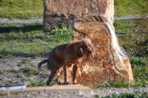 Banksia Park Puppies Jellybean - 13 of 69