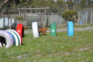 Banksia Park Puppies Jellybean - 17 of 69