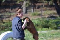 Banksia Park Puppies Jellybean - 19 of 69