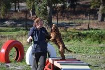 Banksia Park Puppies Jellybean - 26 of 69