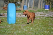 Banksia Park Puppies Jellybean - 37 of 69