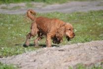 Banksia Park Puppies Jellybean - 38 of 69
