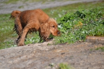 Banksia Park Puppies Jellybean - 39 of 69