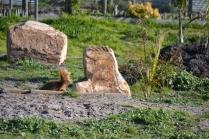 Banksia Park Puppies Jellybean - 4 of 69