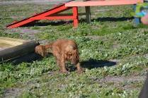 Banksia Park Puppies Jellybean - 50 of 69