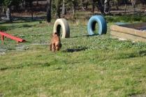 Banksia Park Puppies Jellybean - 52 of 69
