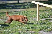 Banksia Park Puppies Jellybean - 58 of 69