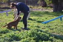 Banksia Park Puppies Jellybean - 67 of 69