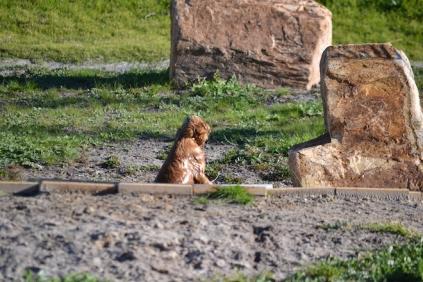Banksia Park Puppies Jellybean - 7 of 69