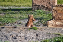 Banksia Park Puppies Jellybean - 8 of 69