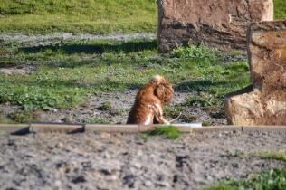 Banksia Park Puppies Jellybean - 9 of 69