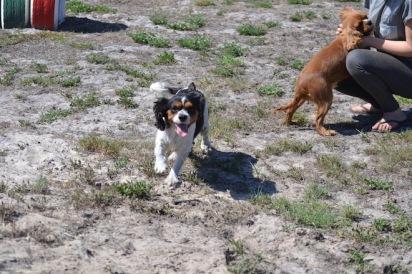 Banksia Park Puppies Odette - 1 of 22 (10)