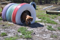 Banksia Park Puppies Odette - 1 of 22 (14)