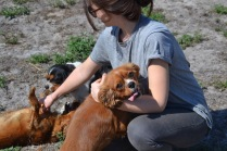Banksia Park Puppies Odette - 1 of 22 (15)