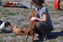 Banksia Park Puppies Odette - 1 of 22 (16)