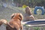 Banksia Park Puppies Odette - 1 of 22 (19)