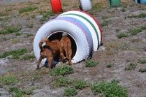 Banksia Park Puppies Odette - 1 of 22 (2)