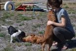 Banksia Park Puppies Odette - 1 of 22 (21)