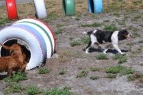 Banksia Park Puppies Odette - 1 of 22 (5)