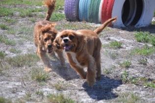 Banksia Park Puppies Odette - 1 of 22 (7)