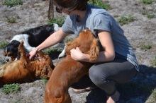 Banksia Park Puppies Odette - 1 of 22 (9)