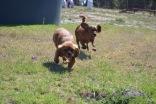 Banksia Park Puppies Odette - 1 of 22
